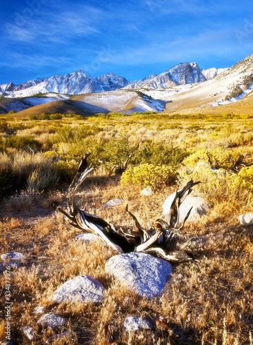 Arid Wilderness of the Eastern Sierras Wallpaper Mural