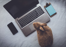 Work From Home Concept With Laptop And Rufus Rabbit Flat Lay Vintage Setting