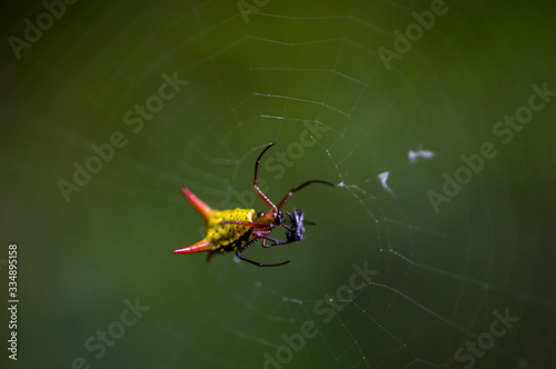 Fotomural Araña Pikachu No3
