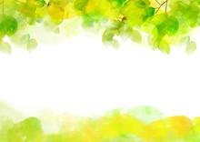 リーフ、葉、葉っぱ、...