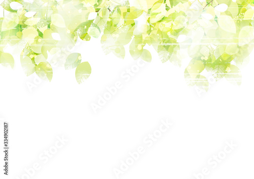 リーフ、葉、葉っぱ、木、樹、新緑、樹木、光、植物、爽やか、背景、風景、ECO、エコロジー、環境、初夏、夏、イラスト、素材、木漏れ日、グリーン、枝、木陰、空、若葉 Fototapete