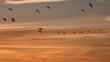 Geese flying low against golden light migration UK 4K