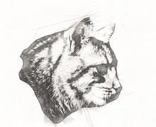 Cat Drawing Illustration Art Vintage Retro Antique