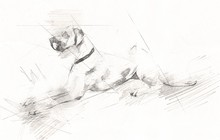 Dog Drawing Illustration Art O...