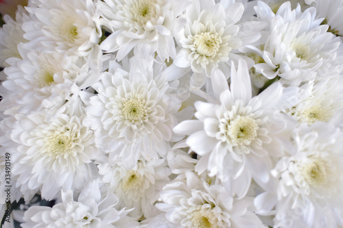 White chrysanthemum Sold at the front of the flower shop #334913149