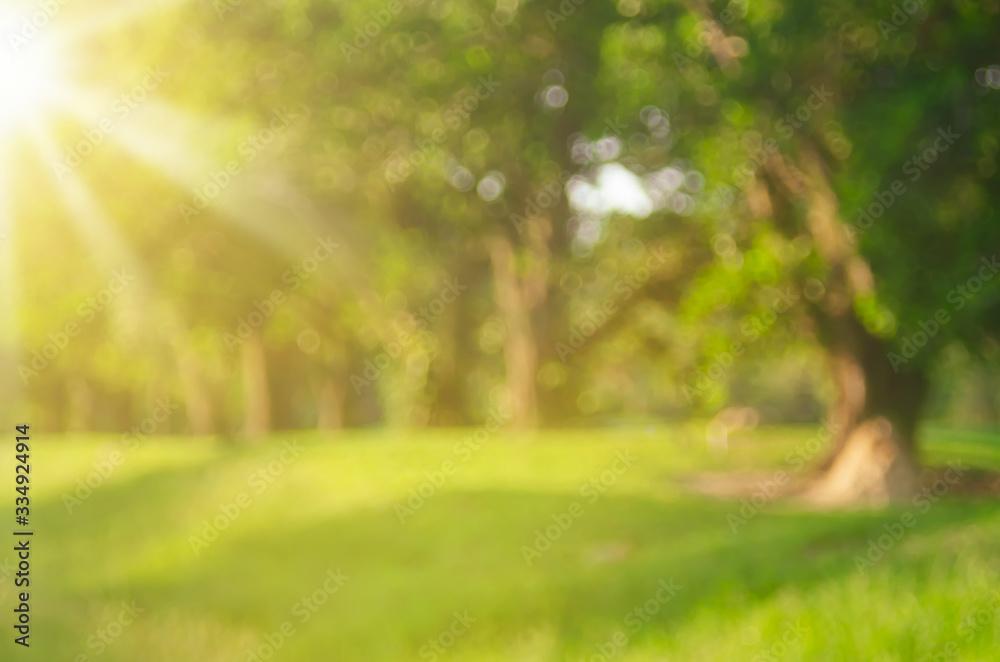 Fototapeta Blur nature green park with sun light abstract background.