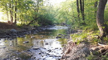 A Nice Pebbled Creek  On A Very Tranquil Atmosphere