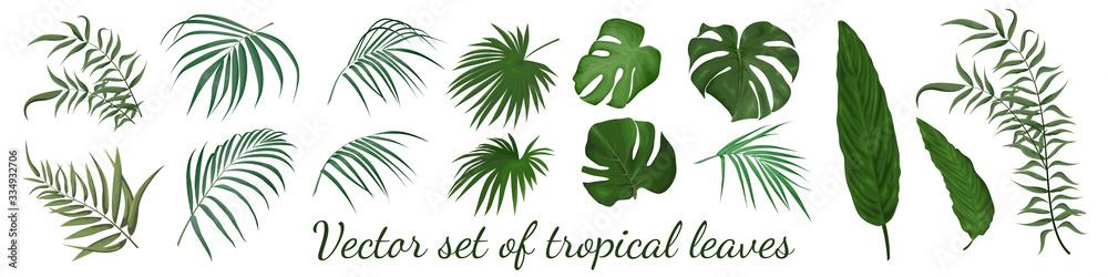 Fototapeta Tropical leaves vector