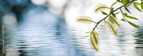 Obraz tree branch above the water - fototapety do salonu