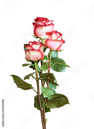 Fotografía Three fresh rose flowers