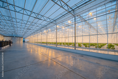 Stampa su Tela Big hydroponics greenhouse farm, is a lot of greens and vegetables
