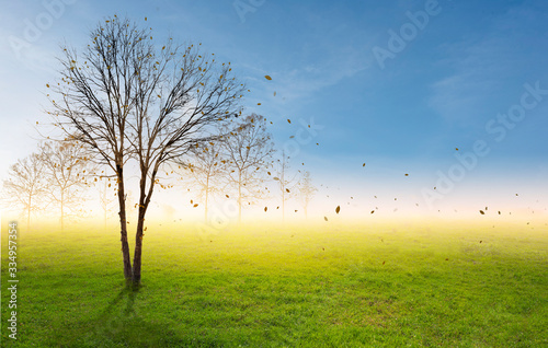 Branches tree on green field under blue sky. Health and environment concept.