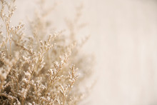 Close Up Dried Brown Flower Plant