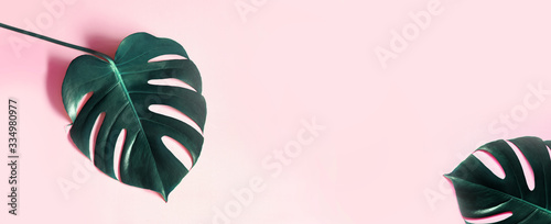 Tropical leaves Monstera on pink horizontal background. Abstarct Flat lay and top view. Tropical leaf of monstera pink background. Tropic monstera on pink background.