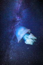 Jellyfish In Outer Space On A ...