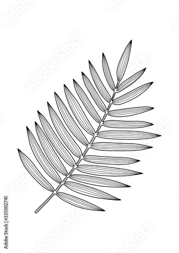 Photo Hand drawing silhouette of tropical leaf areca palm isolated on white background