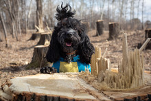 The Dog Leaned On A Stump Of A...