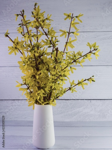 Yellow forsythia in a white ceramic vase indoors on a shiplap surface and background.  Spring wildflowers, a part of nature brought inside!