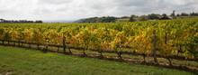 Vineyards Of Saint Emilion Bor...