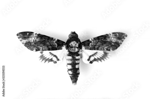 Photo Adult Death's-head Hawkmoth (Acherontia atropos) isolated on white