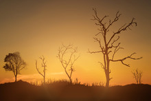 Silhouette Of Dead Tree Agains...