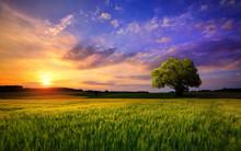 Sunset Scenery On An Open Fiel...