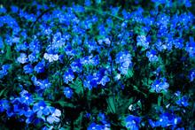 Many Wild Geranium Flowers, Blooming Summer Meadow, Blue Tone Fantasy Wallpaper