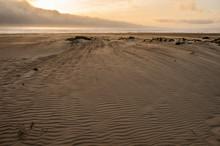Windswept Beach At Sunset