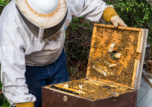 beekeeper working on a beehive Canvas Print
