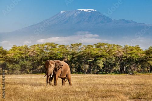 Elephant and Kilimanjaro Fotobehang