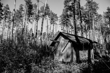 Shed In A Woods. Old House In ...