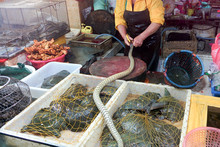 GUANGZHOChinese Typical Fish And Living Snakes And Reptiles Market