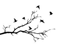 A Tree Branch Without Leaves With Flying Birds. Vector Illustration