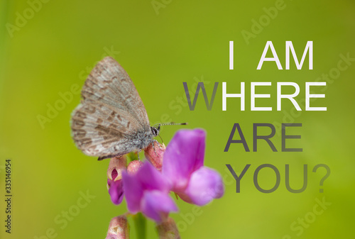 Photo Composite Image with Blues Butterfly & Abstract Fading Aphorism.