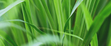 Leaves Panoramic Green  Grass ...