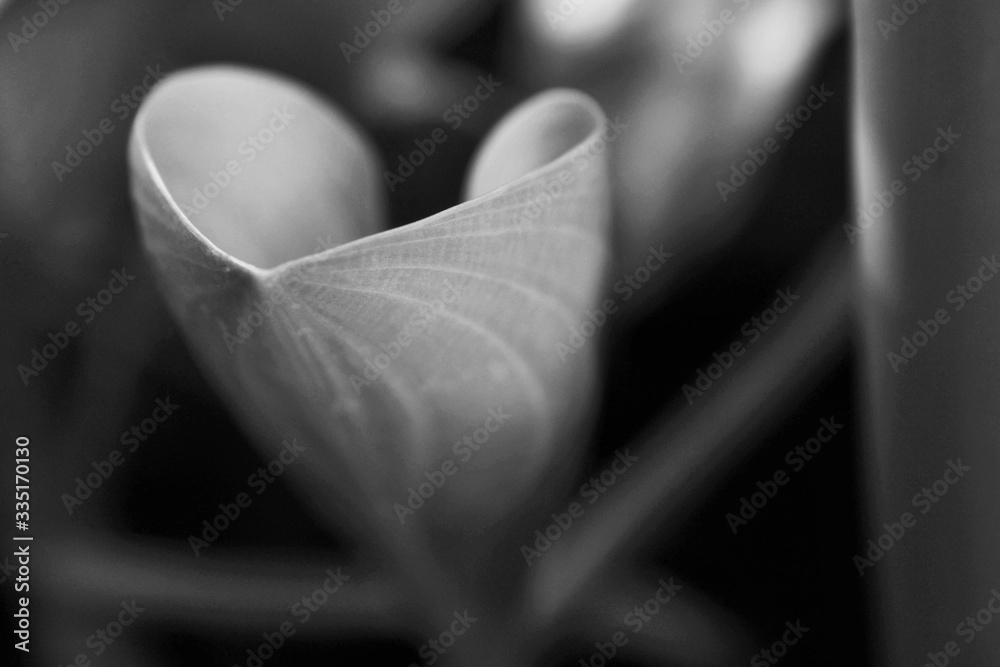 Fototapeta Abstracts: Black side of the lives