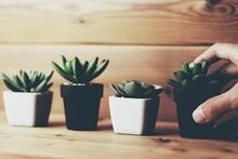 観葉植物と人物