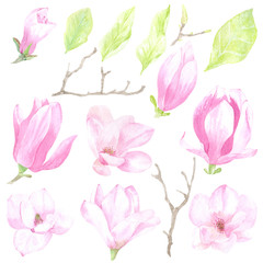Watercolor tender set of flowers and leaves of magnolia. It is perfect for printing design, textile, souvenir products, web sites, scrapbooking, decoupage and other creative projects.