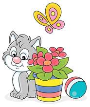 Little Grey Kitten Sitting Nea...