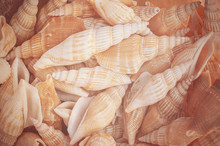 Background From Exotic Shells. Concept Group Of Sea Shells.Sea Mollusks Close-up. Seashells Background. Top View Close Up Of Mollusk.Texture Of Shells Top View.