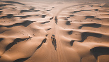 Aerial View Of Camels In Desert
