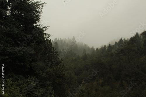 Obraz na plátne Bosque nublado y lluvioso (Dark forest)