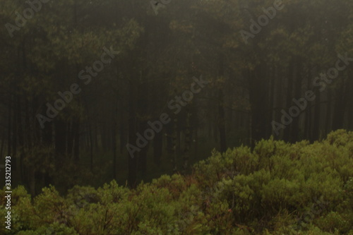 Fotografia, Obraz Bosque nublado y lluvioso (Dark forest)