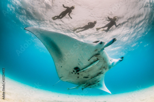 Fotografia Manta ray swimming in the wild with people observing from the surface