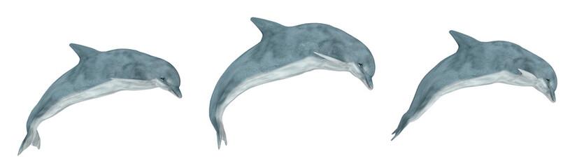 FototapetaDrei springende Delfine, Freisteller