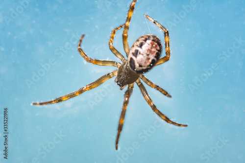 macro close-up photograph of a wild spider, insect details Wallpaper Mural