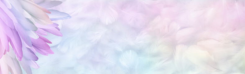 Multicoloured pastel Angel Feather Message Banner Background - a pile of long rainbow coloured feathers in left corner and wide message area with pastel coloured small random fluffy feathers