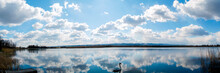 Panoramic View Of A White Swan...