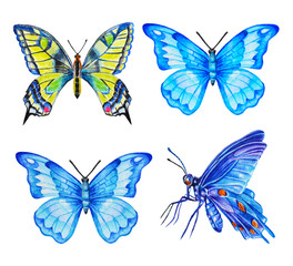 Set of butterflies, watercolor illustration. Hand drawing.