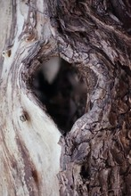 Heart Shaped Tree Hole In Old ...